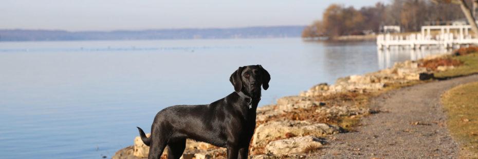 Walking around Lake Geneva with the dog.