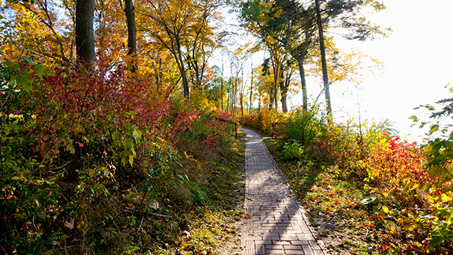 Lake shore path in fall
