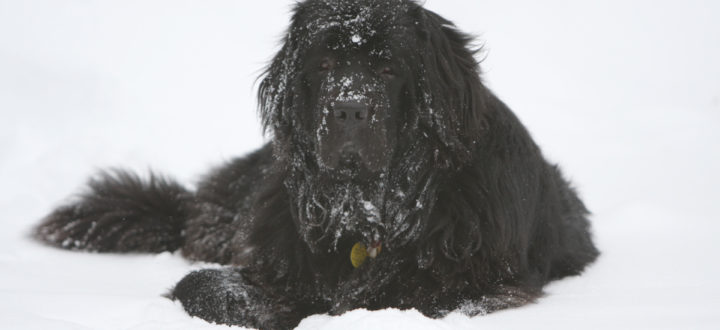 A Nuffie in the snow