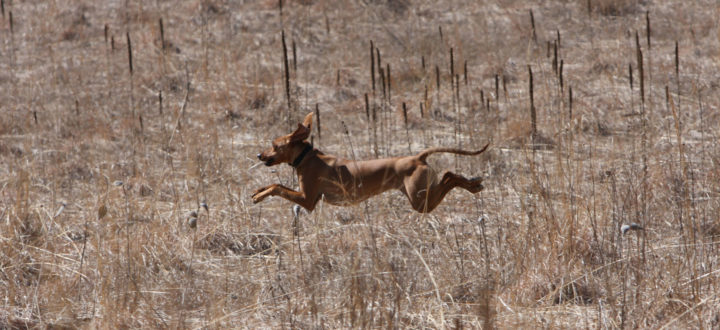 Running free at the Kettle Moraine.
