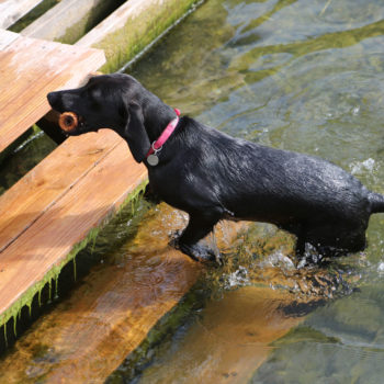 Steps for dogs at Eleven Gables Inn and Cottage